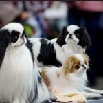 выставка собак ЗООРОССИЯ 2014